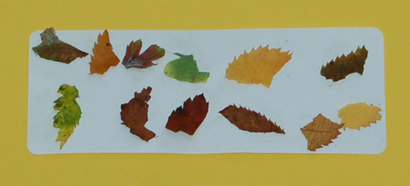 Collect a range of colourful leaves on a sticky label