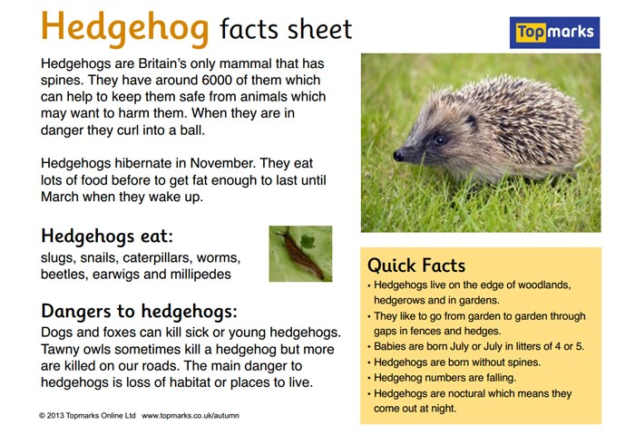 Hedgehog Fact Sheet
