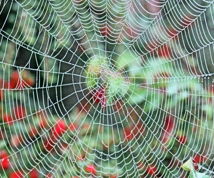 Dew on the Spider's Web in Autumn