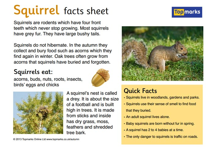 Squirrel Fact Sheet