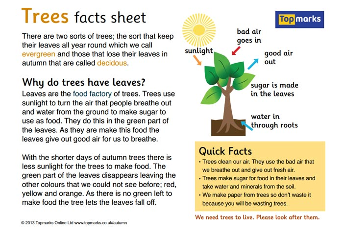 Trees Fact Sheet