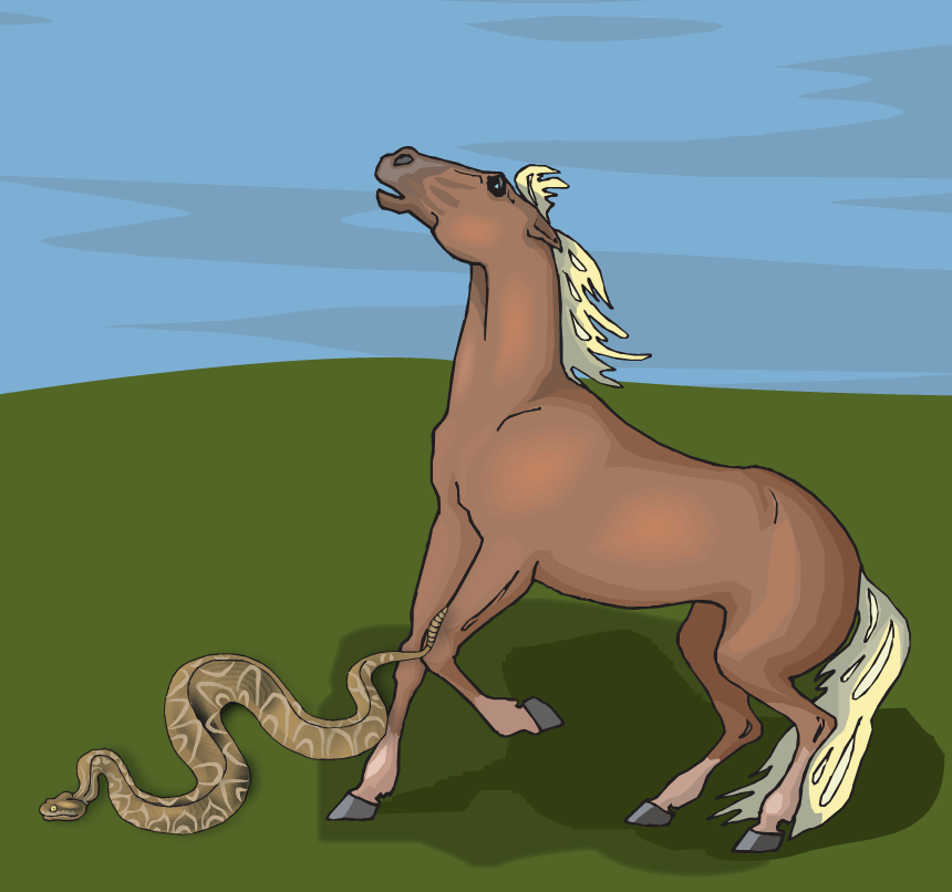 The Snake Surprises the Horse
